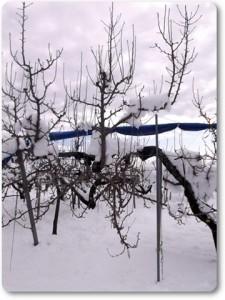 雪の中のル・レクチエ