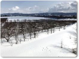 雪で畑まで行けない。