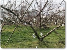 桃の下は緑