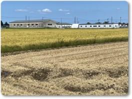 米の収穫は、まだ。-02